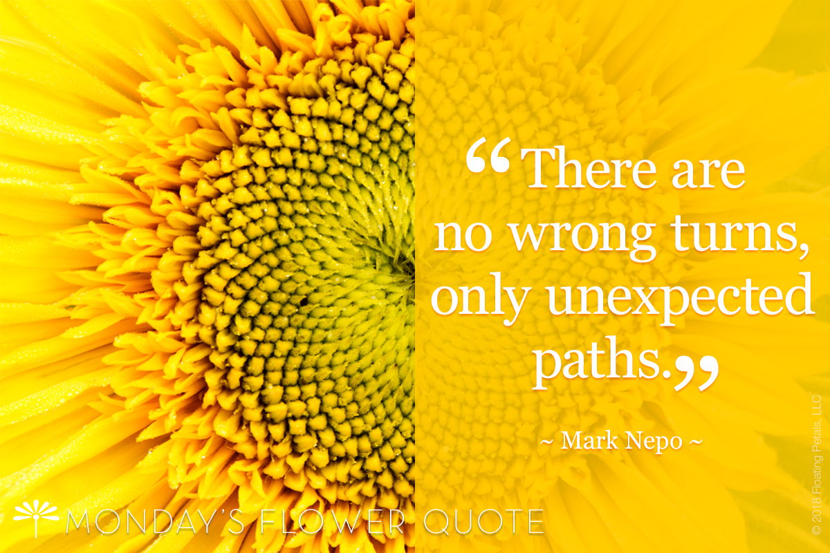 Flower Quote: There are no wrong turns
