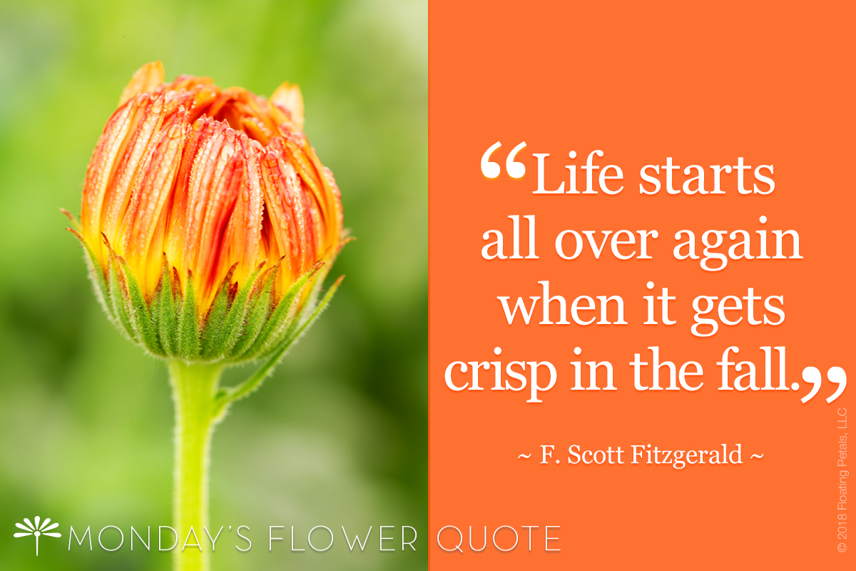 Flower Quote: Life Starts All Over