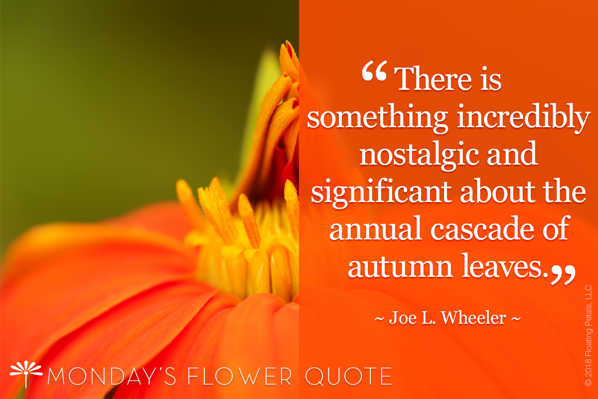 Flower Quote: Autumn Leaves