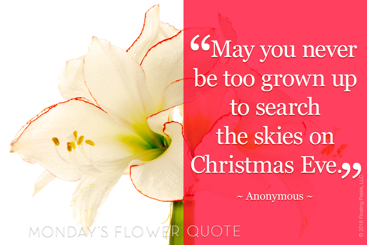 Flower Quote: Christmas Eve
