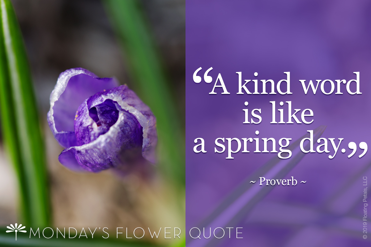 Flower Quote A Kind Word Is Like A Spring Day