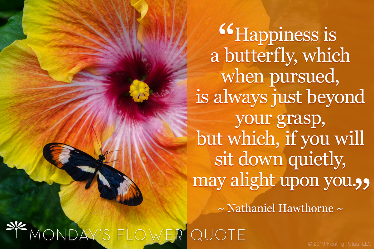 Flower Quote Happiness Is A Butterfly