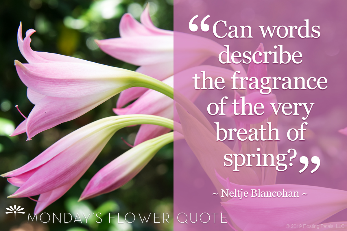 Flower Quote | Can Words Describe