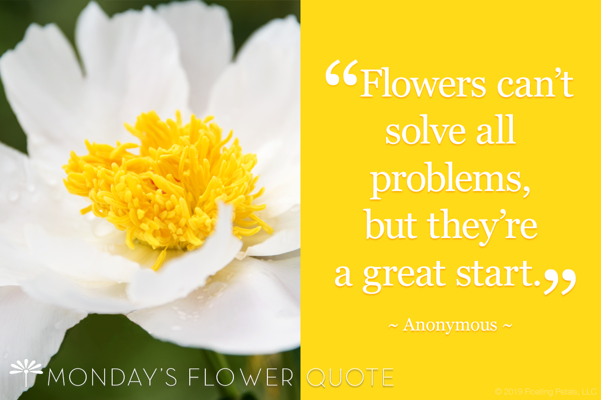 Flower Quote: Flowers can't solve all problems, but they're a great start.