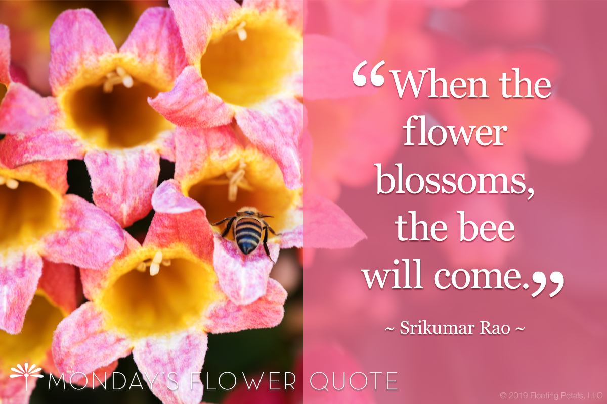 When the flower blossoms the bee will come