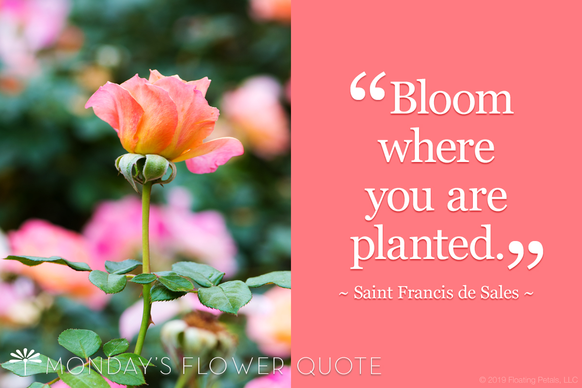 Flower Quote: Bloom Where You Are Planted