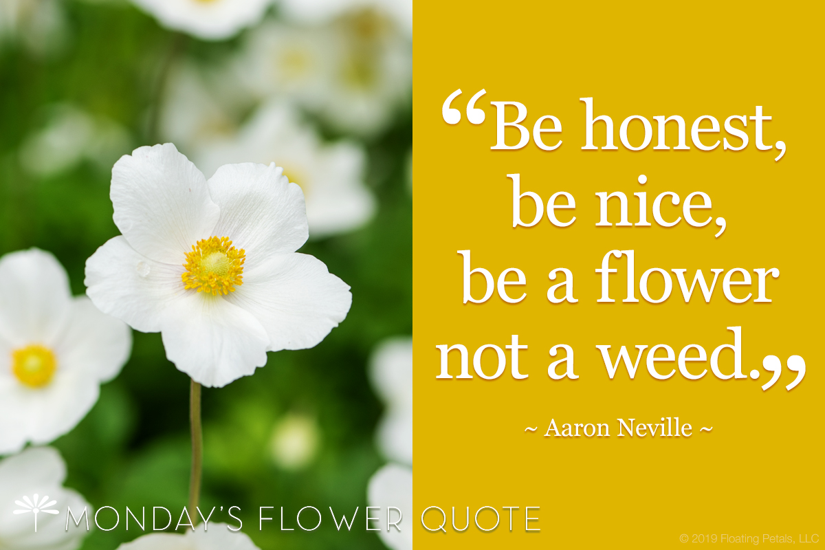 Be Honest, Be Nice, Be A Flower, Not A Weed