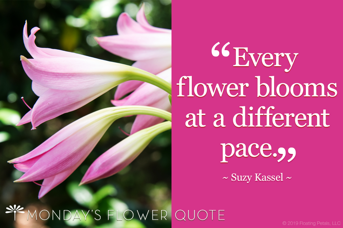 Every flower blooms at a different pace.
