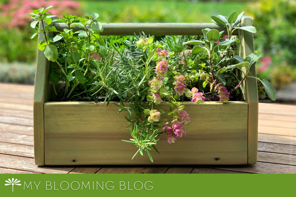 Herbs and a Rustic Tool Box